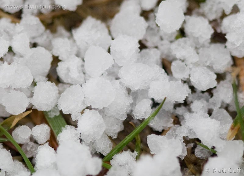 Graupel is a fairly common form of precipitation in fall through spring.   Observed 6 March 2010 on Hillcrest Drive.